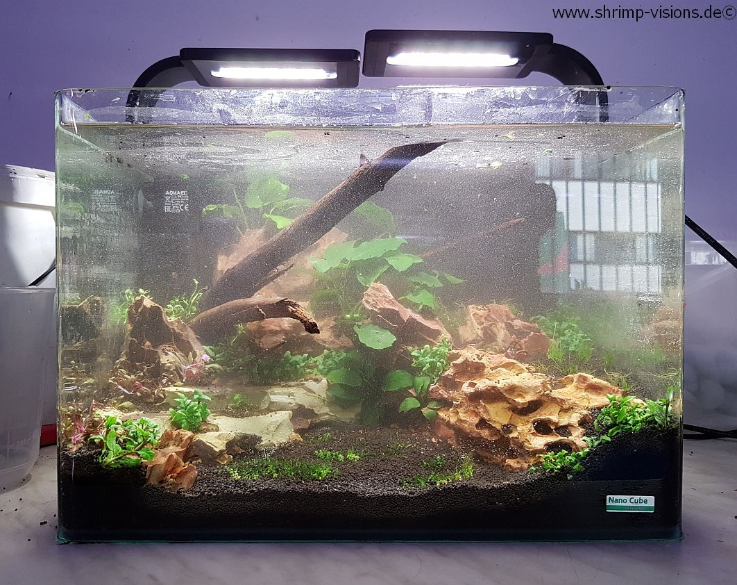 Kundenaquarium_Dennerle_Scapers_Tank_35_L_3
